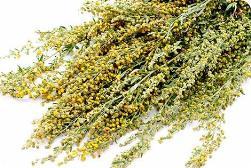Artemisia absinthium (2)