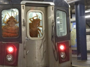 bed bug train1