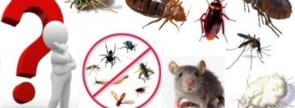 Απεντόμωση – Μυοκτονία : Με ''Αναγγελία'' Επιστήμονα ή Χωρίς.!!!