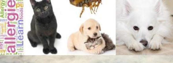 Εξασφαλισμένες Υπηρεσίες Υγιεινής Χώρων Φιλοξενίας Ζώων.!!