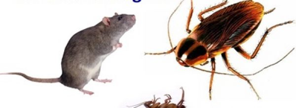 Κατσαρίδες και μικροτριχίδια τρωκτικών αιτίες αλλεργιών.!!