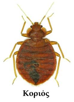 Βυζιά bug